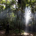 trasluz-selva